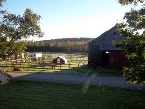 fall is coming to snowshoe farm alpacas