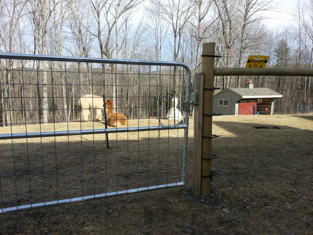 Livestock fencing services from Snowshoe Farm, Peacham, VT