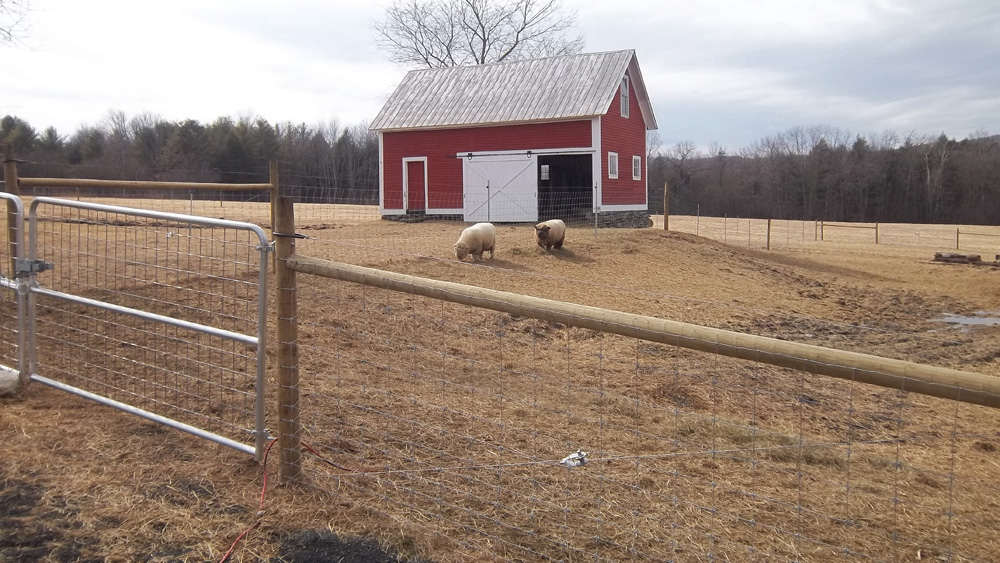 Livestock Fencing Services From Snowshoe Farm Peacham Vt