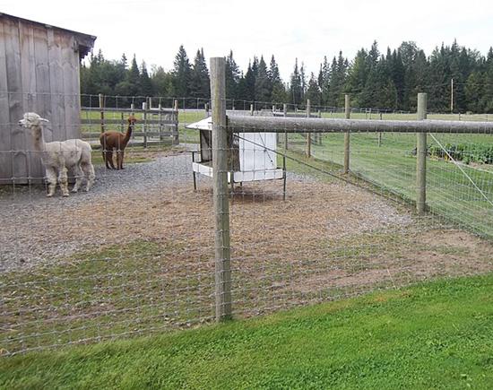 Livestock fencing services from Snowshoe Farm, Peacham, VT