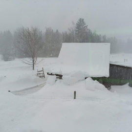 Snowy day at Snowshoe Farm Alpacas, Peacham Vermont